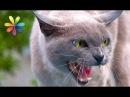 Как перевоспитать дикую кошку в ласкового питомца Все буде добре Выпуск 806 от 10 05 16