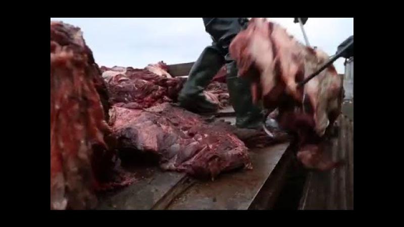 Охота на китов Китобои