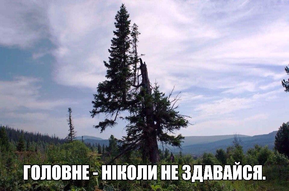 """""""Шестерки! Запомни этот день, в аду гореть будете. Позорники!"""", - во время задержания крымскотатарского активиста Салиева произошла потасовка с силовиками - Цензор.НЕТ 7051"""