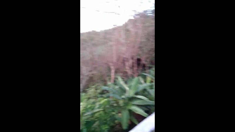 Таиланд_рассвет_6 утра_едем из Кату в Патонг