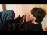 Котенок МЕЙН КУН ест яблоки!!!
