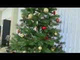 Новогоднее поздравление от интернет магазина детали.zp.ua