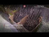 На заводе в Ленобласти к Новому году изготовили 6 млн бенгальских свечей