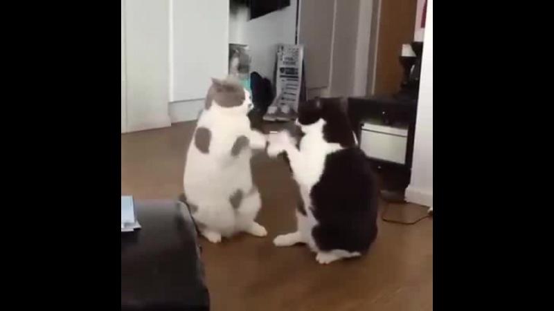 Lazy fight