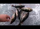 Зимняя Рыбалка на Онего по Окуню. winter fishing. рыбалка в Карелии.