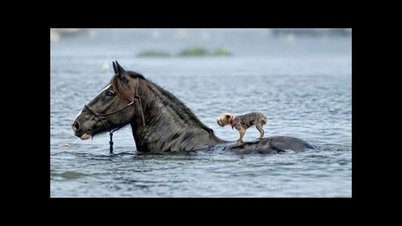 5 Удивительных случаев спасения животных