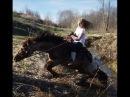 Как заездить лошадь День первый