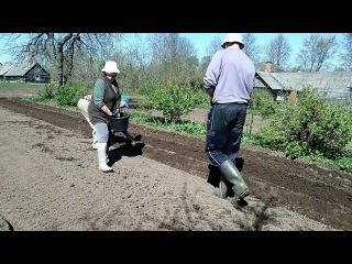 Посадка картофеля трактор МТЗ-82 c СН-4б - YouTube