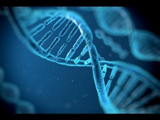 Путешествие по следам ДНК мир такой многообразный