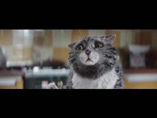 Рождественский ролик про кота 2017.