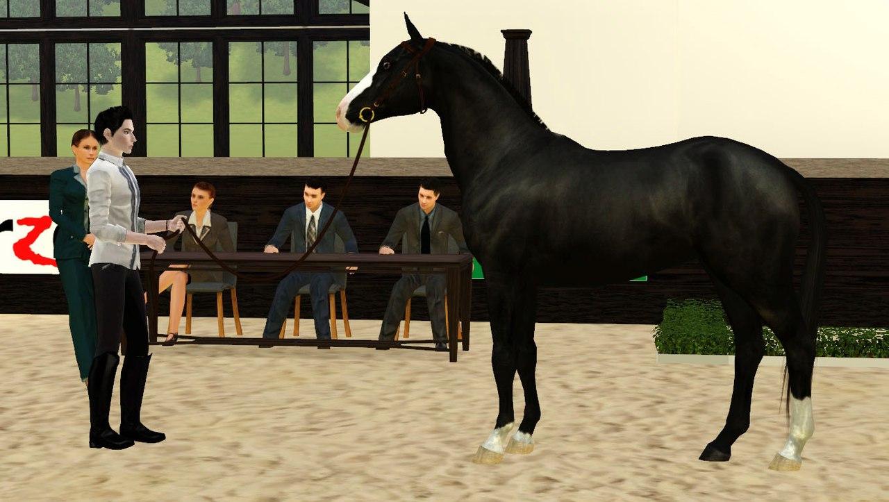 Регистрация лошадей в RHF 2 Nqo99zW7D28