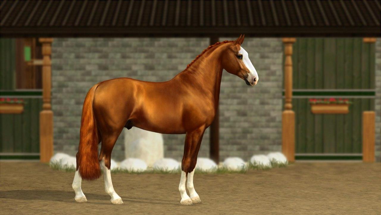 Регистрация лошадей в RHF 2 L0Bqn2TfGiA