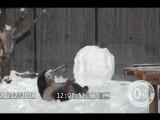 Пана Гуса в нем играет настоящая панда!
