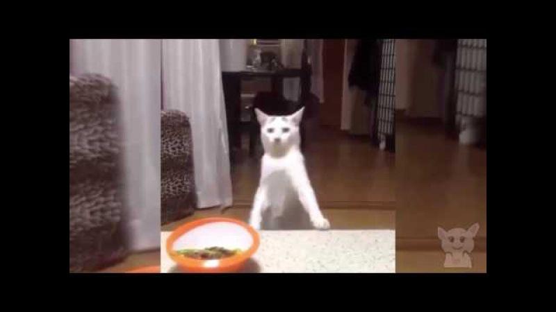 Кот Осторожно Когда полиция засекла Кот осторожно уходит Шпион Котики №16