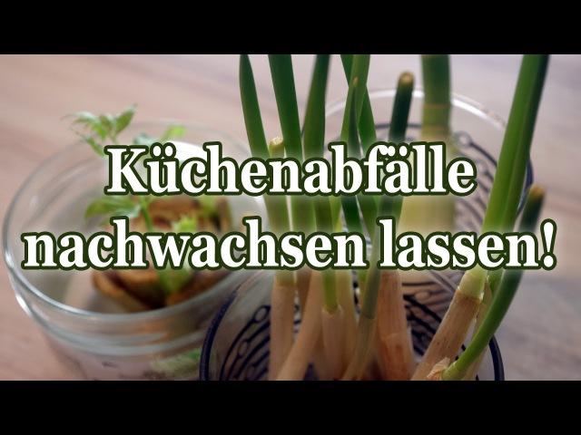 Gemüse in der Küche zum nachwachsen bringen! So holt ihr alles aus euren Küchenabfällen raus!