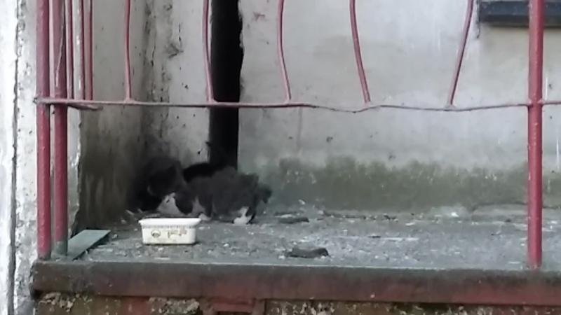 Котята ищут добрые Котята ждут заботливых хозяев и тёплый уютный дом!