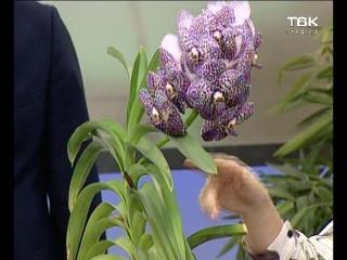 Советы ландшафтного дизайнера: орхидея Ванда