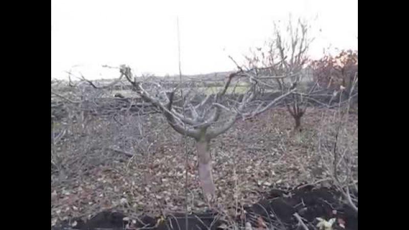ОБРЕЗКА ЯБЛОНИ. Как сделать компактным дерево.PRUNING APPLE TREES.