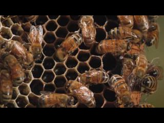 P.F. Chang's Garden to Glass - The Honey Bee Story