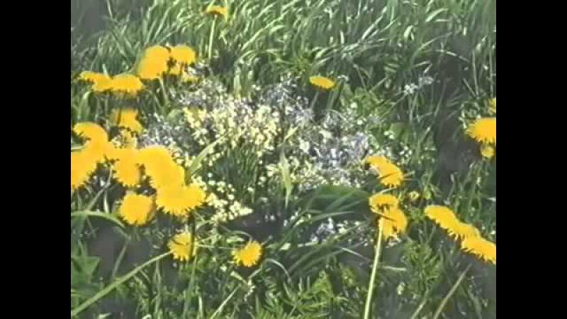 Божий дар. Фильм о целебных растениях