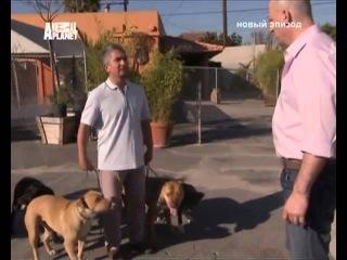 Переводчик с собачьего 4x26 2008 Fear of Dogs