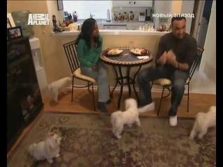 Переводчик с собачьего 4x31 2008 Canine 9-1-1 Part 2