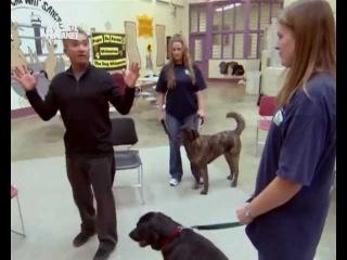 Переводчик с собачьего 2x14 2006 Pups on Parole, Eton Dolly