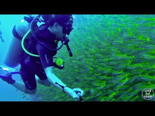 Koh Phi Phi | Thailand | Swimming With a School of Fish (GOPRO)