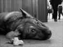 Пёс, грустная песня о бездомных животных