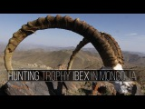 Hunting Trophy Ibex in Mongolia