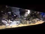 3D объемный фон для аквариума-6