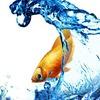 Астраханский форум аквариумистов Золотая Оранда