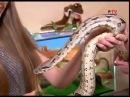 Змеи в домашних условиях
