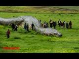 ANACONDAS GIGANTES REALES: Anacondas mas grandes del mundo – Animales salvajes
