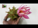 DIY Craft tutorial How to make paper flower Cactus by crepe paper Làm xương rồng giấy nhún