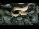 Dimmu Borgir Progenies of the great apocalypse HD