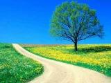 Tiempo de primavera - Raul Di Blasio
