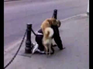 Собака трахает мужика под бутиратом