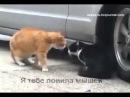 Кошка ругает кота за измену, прикол.