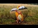 Танец цыпленка Пиу-Пиу