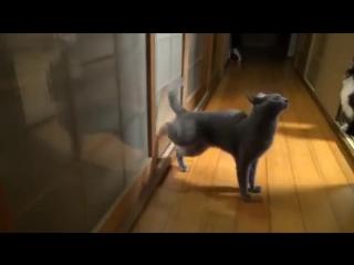 Кот стучится в дверь