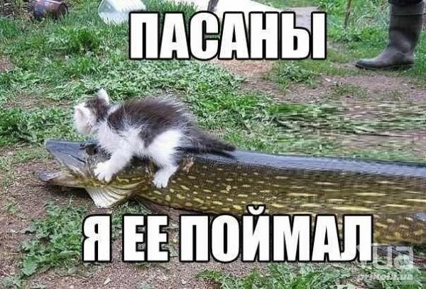 https://cs7062.vk.me/c636326/v636326679/355a3/2M2u2mkCyEE.jpg