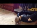 Хорек играет с черной кошкой