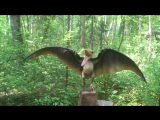 Птеродактиль - крылатый ящер