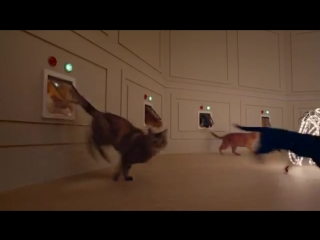 Самая прекрасная новогодняя реклама с котиками