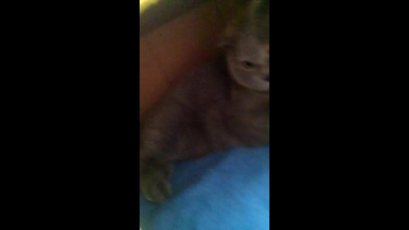 Была такая кошка Алмаз, теперь у нее свой дом в домике без стука не входить))