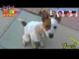 [Bears] 111010 TVXQ HEY 33x3 Music Champ Especial Part 01 Sub rus