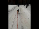 video-2017-02-19-12-11-15 Догоняем Ричи с Джеем