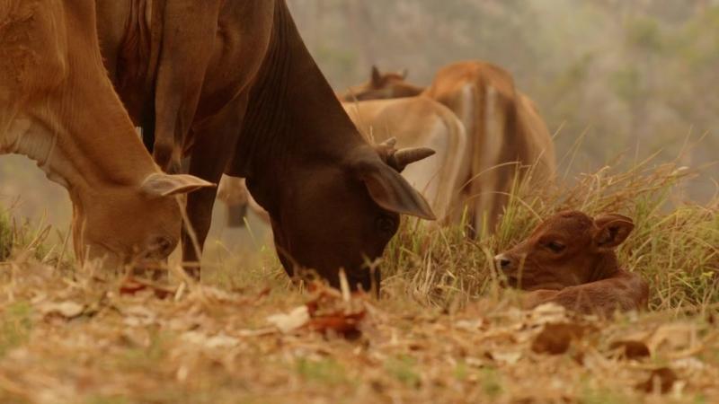 BBC: В краю муссонов - Засуха (2014) HD