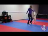 I've Got Faith ~ Canine Freestyle Routine